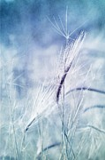 Plant Metal Prints - Roadside Blues Metal Print by Priska Wettstein
