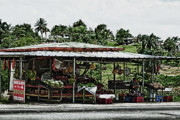 Puerto Rico Digital Art Prints - Roadside Bodega in Puerto Rico Print by Frank Feliciano