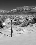 Taos Prints - Roadside Memorial Print by Troy Montemayor