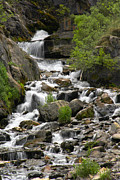 Stream Digital Art Prints - Roadside Mountain Stream Print by Mike McGlothlen