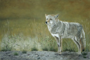 Patricia Mansell - Roadside Warrior-Coyote