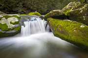 Water Flowing Prints - Roaring Fork Great Smoky Mountains National Park - The Simple Pleasures Print by Dave Allen