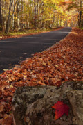 Roaring Fork Road Posters - Roaring Fork Motor Trail in Autumn Poster by Andrew Soundarajan
