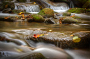 Great Smoky Mountains Posters - Roaring Fork Stream Great Smoky Mountains Poster by Steve Gadomski