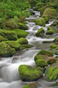 Gatlinburg Prints - Roaring Fork Stream Print by Harold Stinnette