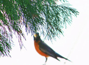 Impressionism Photos - Robin 2 by Lenore Senior
