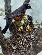 Robin And Babies In Nest Print by Jill Battaglia