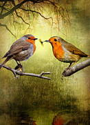 Robin Framed Prints - Robin Gifts Framed Print by Julie L Hoddinott