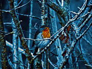 Pat  J Falvey - Robin in the woods