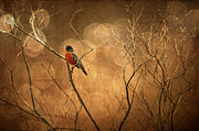 Red Birds Digital Art - Robin by Lois Bryan