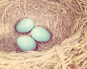 Baby Room Posters - Robins Eggs Poster by Amy Tyler