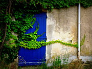 France Doors Posters - Robust Vine on Blue Door Poster by Lainie Wrightson
