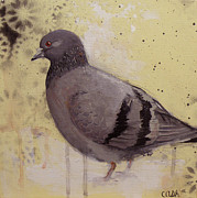 Dove Painting Originals - Rock Dove by Curtis Ashby