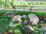 Split Rail Fence Framed Prints - Rock Garden in Lavender Framed Print by Gretchen Wrede