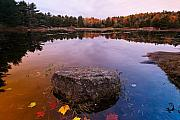 Rock In A Pond Acadia Natioanl Park Maine Print by George Oze