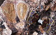 Lepidopterans - Rock Of Ages by Eric Kempson