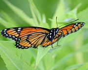 Insects Photos - Rocking Chair by Neal  Eslinger