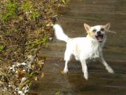 Little Dog Photos - Rocko and the Hose by Mandy Shupp