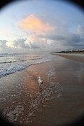 Jack Russell Prints - Rocko at Sunrise Print by Mandy Shupp