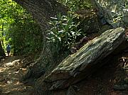 Chimney Rock State Park Prints - Rocks and Rhododendron at Chimney Rock Print by Anna Lisa Yoder