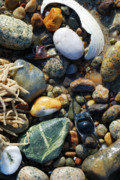 Rocks And Shells Print by Charles Harden