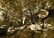 Fantasy Dreamy Oak Trees Posters - Rocks and Trees 1 sepia Poster by Maynard Smith