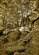 Fantasy Dreamy Oak Trees Posters - Rocks and Trees 2 sepia Poster by Maynard Smith