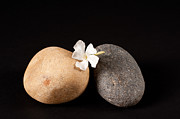 Still Image Prints - Rocks And White Fower Print by Catherine Lau