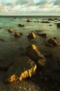Color Of Dawn Posters - Rocks In Shallow Water By The Shore Poster by Ben Welsh