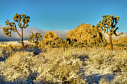 Pretty Clouds Prints - Rocks Joshua Trees in Snow Print by Connie Cooper-Edwards