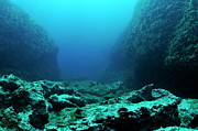 Sami Sarkis - Rocks on ocean floor