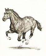 Horse Drawings Framed Prints - Rocky 1 Framed Print by Lorrie Kalena