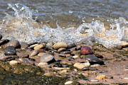 Splish Splash Posters - Rocky Beach Poster by Kathy Stanton