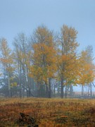 In The Fog Photo Posters - Rocky Mountain Aspens Poster by Ken Smith