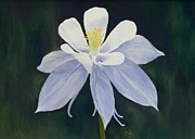 Botanical Pastels Originals - Rocky Mountain Columbine by Xenia Sease