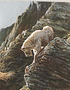Mountain Goat Painting Prints - Rocky Mountain Goat Print by Steve Greco