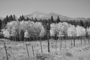 Fall Photos Prints - Rocky Mountain High Country Autumn Fall Foliage Scenic View BW Print by James Bo Insogna