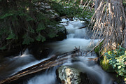 Colorado Stream Prints - Rocky Mountain morning Print by David Bearden
