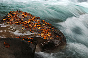 Canadian Rockies Photos - Rocky Mountain Stream by Bob Christopher