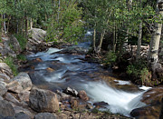 Colorado Stream Posters - Rocky Mountain Stream Poster by Robert Pilkington