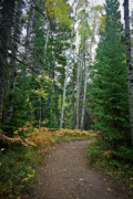 Rocky Mountain National Park Posters Posters - Rocky Mountain Trail to..... Poster by Brent Parks