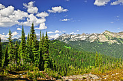 Canadian Rockies Prints - Rocky mountain view from Mount Revelstoke Print by Elena Elisseeva