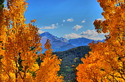Fall Photos - Rocky Mountain Yellow by Emily Stauring