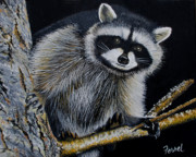 Raccoon Painting Posters - Rocky Raccoon Poster by Ferrel Cordle