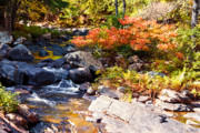 Fall Trees With Stream. Art - Rocky Stream Waterfalls by Sherry  Curry