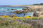 Scenic Drive Framed Prints - Rocky Surf with Wildflowers Framed Print by Carol Groenen