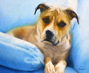 Dog Paintings - Rocky the American Staffordshire Terrier by Jill Brabant