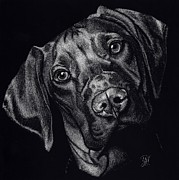 Puppy Drawings - Rocky by Yenni Harrison