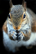 Photos Of Animals Prints - Rodent Print by Skip Willits