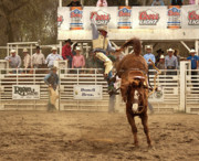Rodeo Art Digital Art Originals - Rodeo Cowboy is Thrown from his Horse by Mark Hendrickson